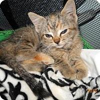 Adopt A Pet :: Sparrow - Chandler, AZ