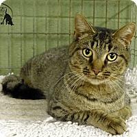 Adopt A Pet :: Becca - Marlinton, WV