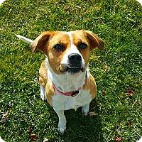 Adopt A Pet :: Java - Wapakoneta, OH