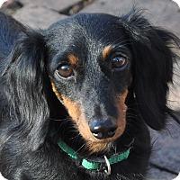 Adopt A Pet :: Ava - Lebanon, TN