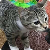 Adopt A Pet :: Buster Brown - Lexington, KY