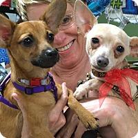 Adopt A Pet :: Nicky & Peanut - Phoenix, AZ