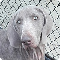 Adopt A Pet :: Raine - Birmingham, AL