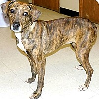 Adopt A Pet :: Totsie - Washington Court House, OH