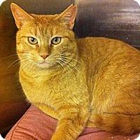 Adopt A Pet :: Mono - Pittstown, NJ