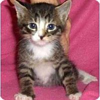 Adopt A Pet :: Brody - Richmond, VA