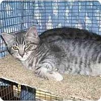 Adopt A Pet :: Grus - Davis, CA