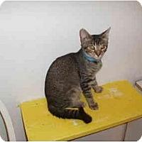 Adopt A Pet :: Albuquerque - Hamburg, NY