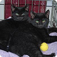 Adopt A Pet :: Violet - CARVER, MA