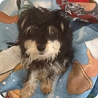 Adopt A Pet :: Raymond - Redondo Beach, CA