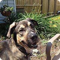 Adopt A Pet :: Chuck - Saskatoon, SK