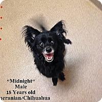 Adopt A Pet :: 1-3 Midnight - Triadelphia, WV