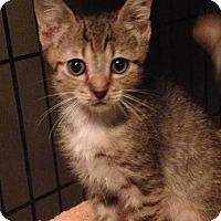 Adopt A Pet :: Casey - East Brunswick, NJ