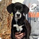 Adopt A Pet :: Donner