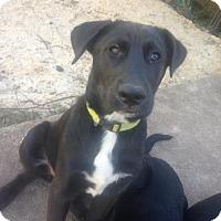 Adopt A Pet :: A356007/3  Penguin - San Antonio, TX