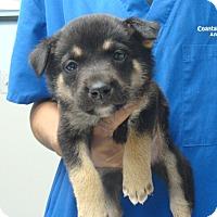 Adopt A Pet :: Alexander - Wharton, TX