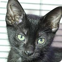 Adopt A Pet :: Ava - Sarasota, FL