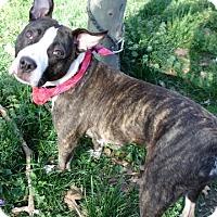 Adopt A Pet :: Chloe - Ridgefield, CT