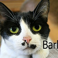 Adopt A Pet :: Barbie - Wichita Falls, TX