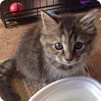 Adopt A Pet :: Harper - Evans, WV