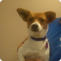 Adopt A Pet :: Peaches - Oviedo, FL
