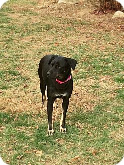 Shepherd (Unknown Type)/Shepherd (Unknown Type) Mix Dog for adoption in Lima, Pennsylvania - Mama Cass