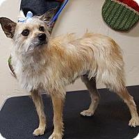 Adopt A Pet :: Willow - Norman, OK