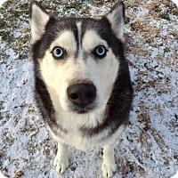 Adopt A Pet :: Cheyenne - Xenia, OH