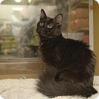 Adopt A Pet :: Persia - Albany, NY