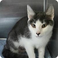 Adopt A Pet :: Kichi - Hilton Head, SC