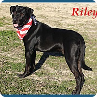 Adopt A Pet :: Riley - Hillsboro, TX