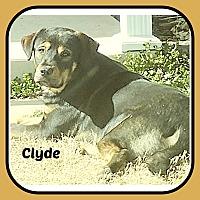 Adopt A Pet :: CLYDE - Malvern, AR