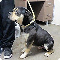 Adopt A Pet :: Duece (Bowser) - Monte Vista, CO