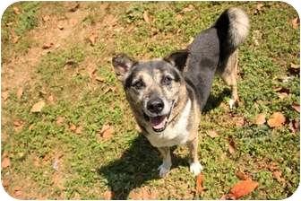 Australian Cattle Dog/Shepherd (Unknown Type) Mix Dog for adoption in Key Biscayne, Florida - Pal