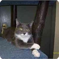 Adopt A Pet :: Esmeralda - Milwaukee, WI