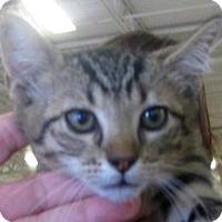Adopt A Pet :: Taro - Dallas, TX