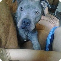 Adopt A Pet :: Jenna - Bloomsburg, PA