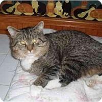 Adopt A Pet :: Brewster - Hamburg, NY