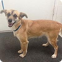 Adopt A Pet :: Casey - Lancaster, VA