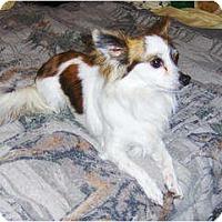Adopt A Pet :: Jasper - Orange Park, FL