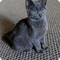 Adopt A Pet :: Miley - Middletown, OH