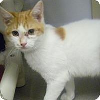 Adopt A Pet :: Tangerine - Hamburg, NY