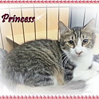 Adopt A Pet :: Princess - Orange City, FL