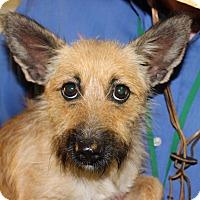 Adopt A Pet :: Lady - Brattleboro, VT