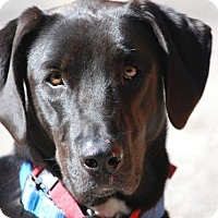 Adopt A Pet :: Lucy - in Maine - kennebunkport, ME