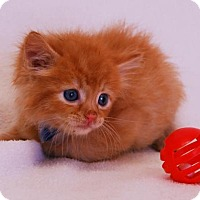 Adopt A Pet :: Quaker - Toccoa, GA