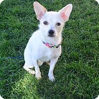 Adopt A Pet :: Princess - Meridian, ID