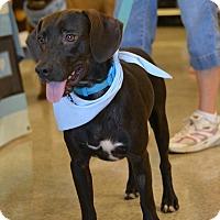 Adopt A Pet :: Tango Boy - Frederick, MD