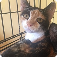 Adopt A Pet :: Frangipani - Encinitas, CA