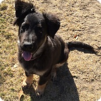 Adopt A Pet :: Xena - Victorville, CA